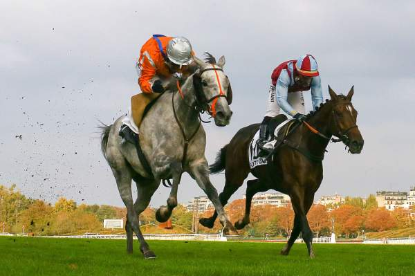 La photo de Paul's Saga Course Pmu Pick5 Grande Course de Haies d'Auteuil 2020