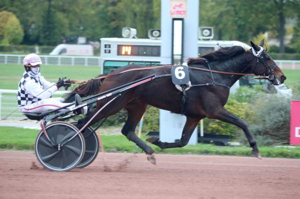 Photo de MARCELLO WIBB cheval de TROT ATTELE