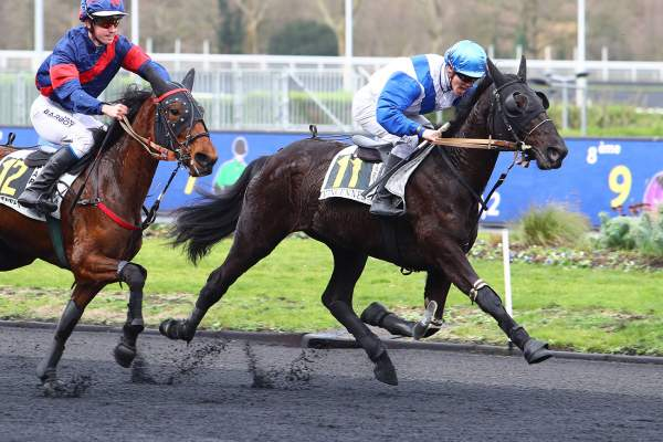 Photo de HORA BOT EUR MOEL cheval de TROT MONTE