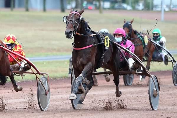EADSHOT JOSSELYN - La fiche CANALTURF du cheval, performances pmu, pédigré,  évolution de la cote en direct, résultats rapports, courses 2020