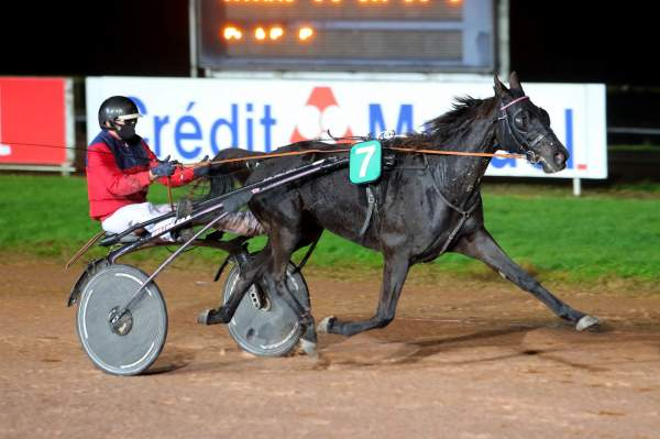 Photo de EBENE MARVIC cheval de TROT ATTELE