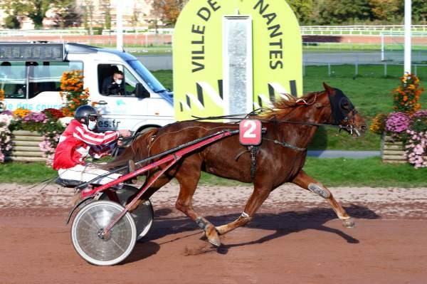 DATALIE DU DERBY - La fiche CANALTURF du cheval, performances pmu, pédigré,  évolution de la cote en direct, résultats rapports, courses 2020
