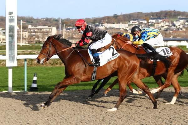 Photo de SILVESTRI cheval de PLAT