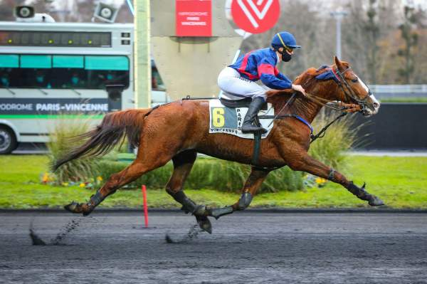 Photo de HELITLOPET cheval de TROT MONTE