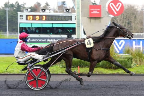 Photo de IZOARD VEDAQUAIS cheval de TROT ATTELE