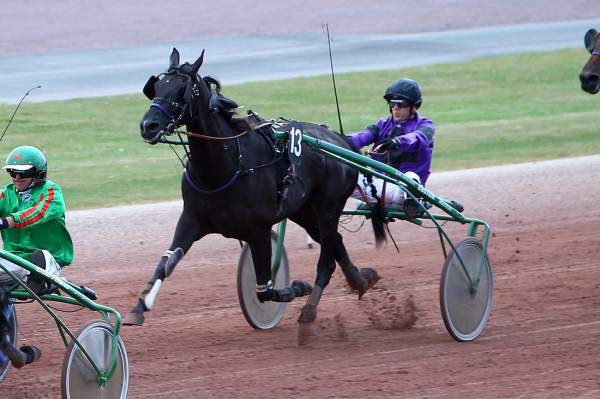 Photo de EROS DU BRISSE cheval de TROT ATTELE