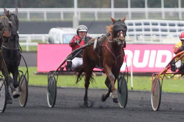 CHAYANE DE CALVI - La fiche CANALTURF du cheval, performances pmu, pédigré,  évolution de la cote en direct, résultats rapports, courses 2020
