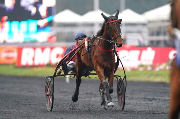 Photo de DELIA DU POMMEREUX cheval de TROT ATTELE