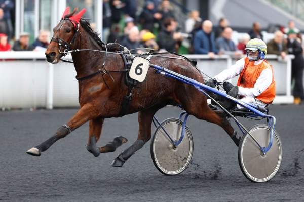 Photo de ENZO SLIPPER cheval de TROT ATTELE