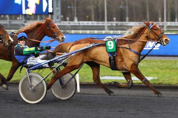 FLACA - La fiche CANALTURF du cheval, performances pmu, pédigré, évolution  de la cote en direct, résultats rapports, courses 2021