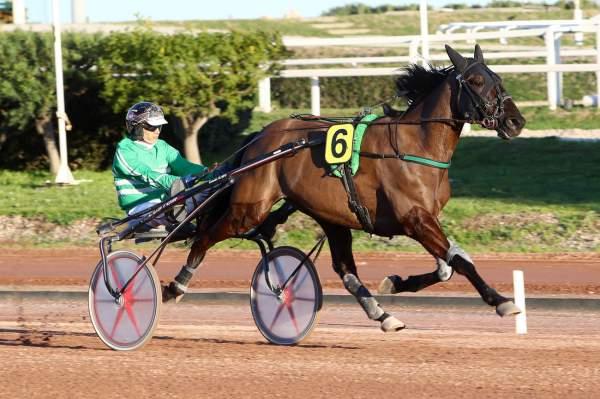 Photo de ELMAGNIFICO DE LOU cheval de TROT ATTELE