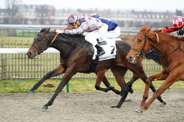 Photo de FROHSIM cheval de PLAT