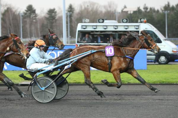 Photo de FIABLE cheval de TROT ATTELE
