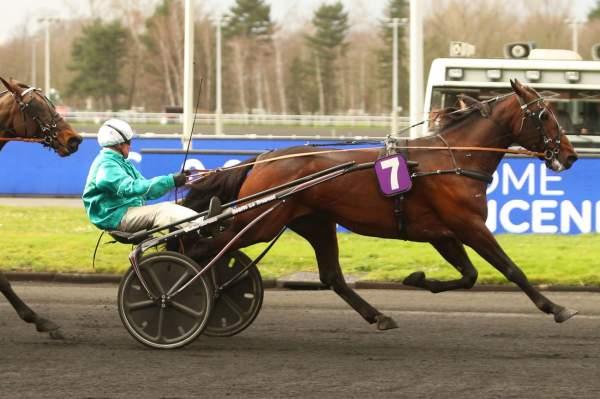 Photo de VIOLETTO JET cheval de TROT ATTELE