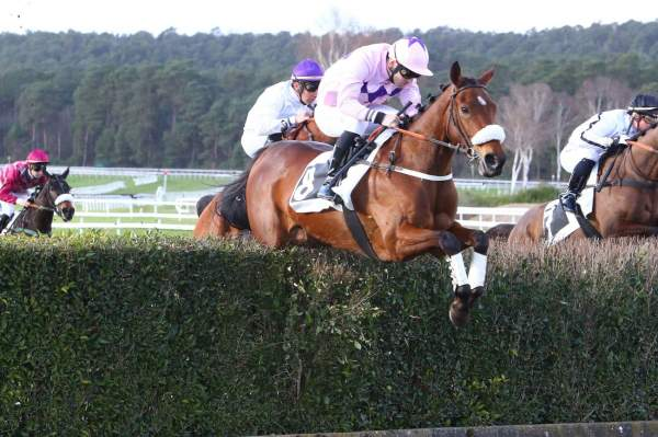 Photo de SA CARLEX cheval de STEEPLE CHASE