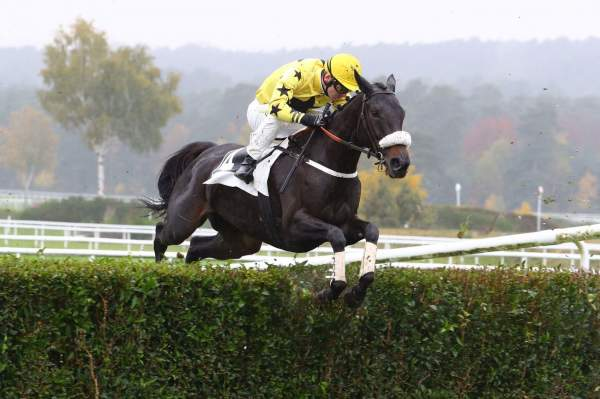Photo de SAMBA NONANTAISE cheval de STEEPLE CHASE