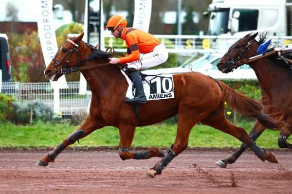 Photo de DREAM DU CHOQUEL cheval de TROT MONTE