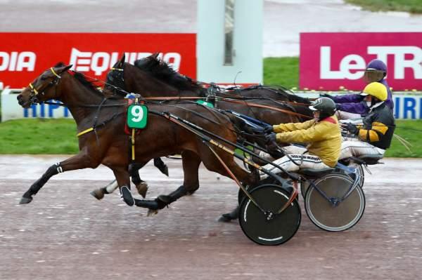 Photo de FEE DU VERNAY cheval de TROT ATTELE