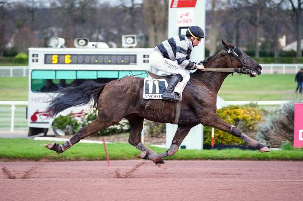 Photo de FASCINOSO DE LOU cheval de TROT MONTE
