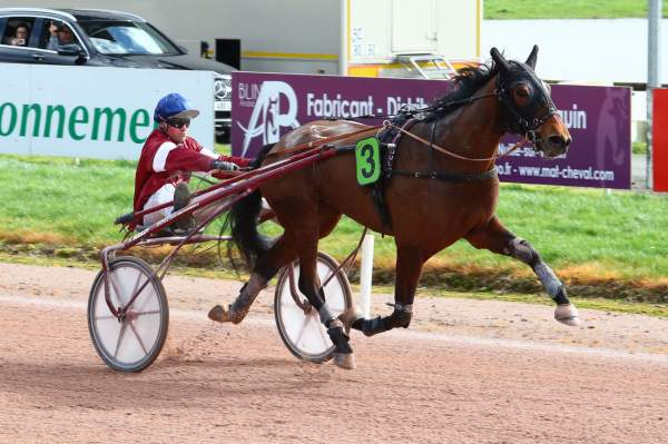 Photo de HESTIA D'HERIPRE cheval de TROT ATTELE