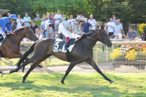 Photo de GLYSANDRINE cheval de PLAT