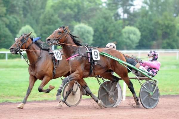 Photo de FIDELE ROYAL cheval de TROT ATTELE
