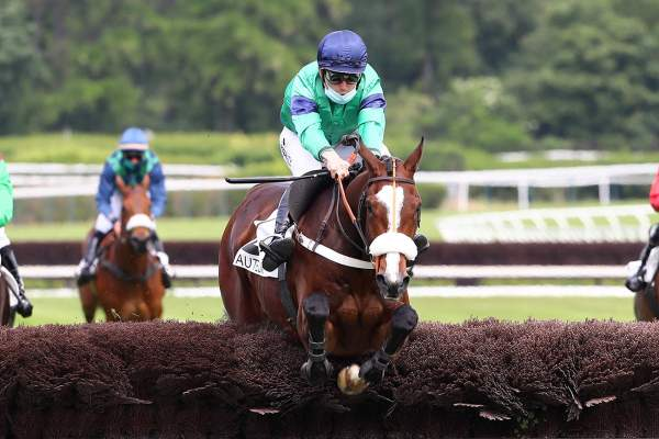 Photo de HEROS D'AINAY cheval de HAIES