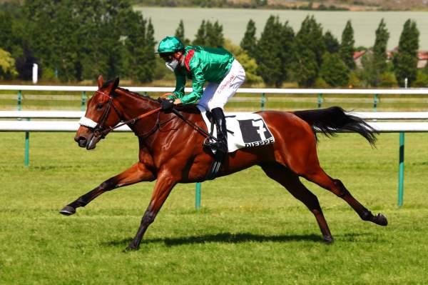 Photo de CABIYA cheval de PLAT
