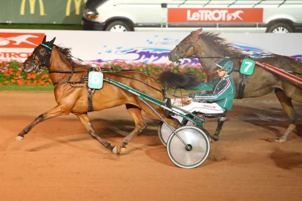 Photo de FICTION D'ERABLE cheval de TROT MONTE