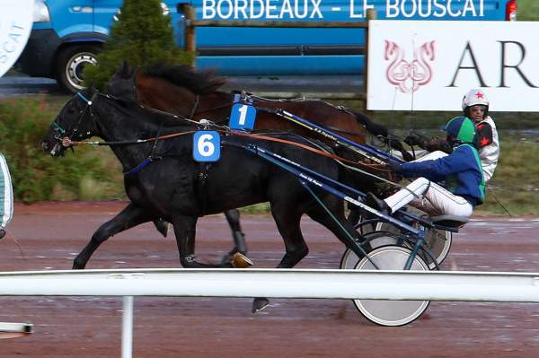 Photo de ELEGANT DE TESS cheval de TROT ATTELE