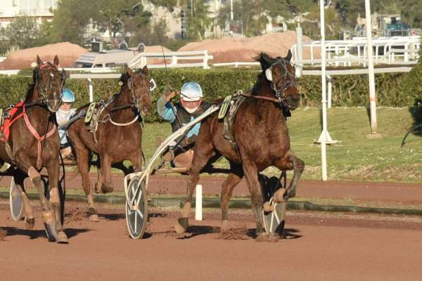 Photo de FAKIR DU RANCH cheval de TROT ATTELE