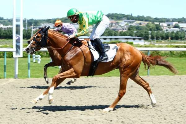 Photo de LETTYT FIGHT cheval de PLAT