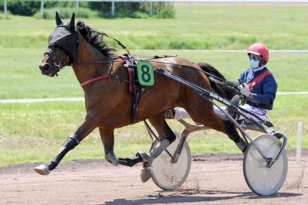 Photo de HAVE SEVEN cheval de TROT ATTELE