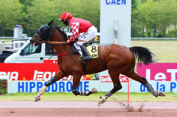 Photo de GALDRIC D'ECHAL cheval de TROT MONTE