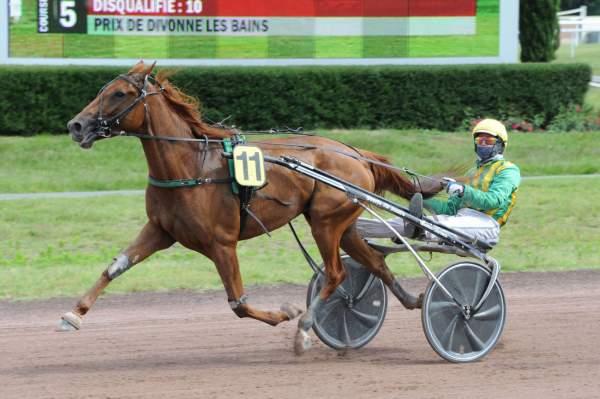 GELA DE BELLOUET - La fiche CANALTURF du cheval, performances pmu, pédigré,  évolution de la cote en direct, résultats rapports, courses 2020