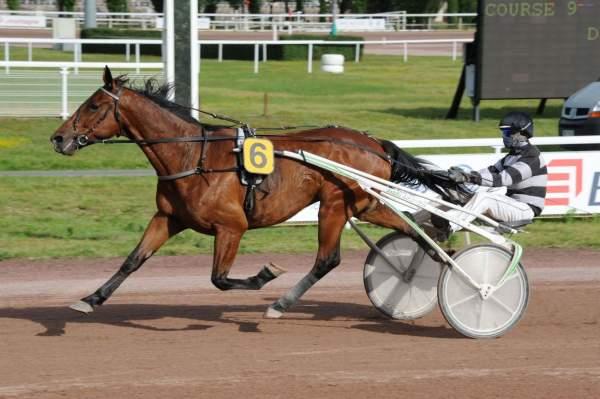 Photo de DOMINGO DE LOU cheval de TROT ATTELE