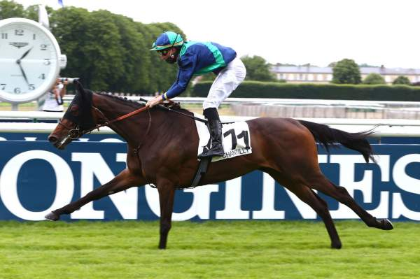 Photo de PADOVANA cheval de PLAT