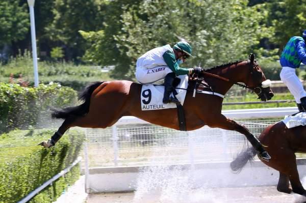 Photo de CLASSIQUE  cheval de HAIES