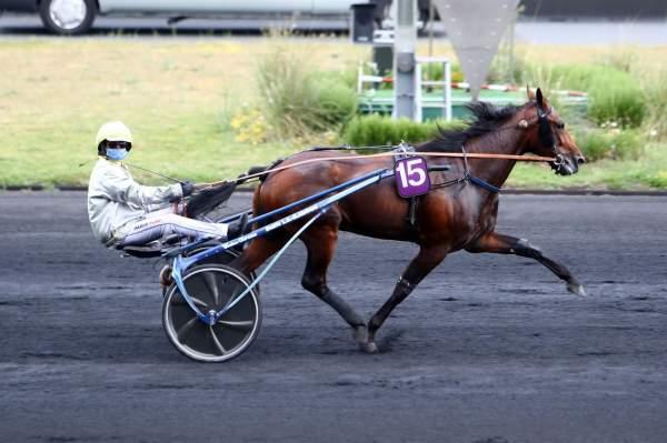 Photo de ALCIDE ROC cheval de TROT ATTELE