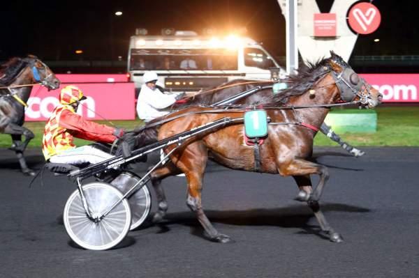 ELFE ATOUT - La fiche CANALTURF du cheval, performances pmu, pédigré,  évolution de la cote en direct, résultats rapports, courses 2020