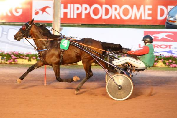 Photo de HANNIBAL CARNOIS cheval de TROT ATTELE