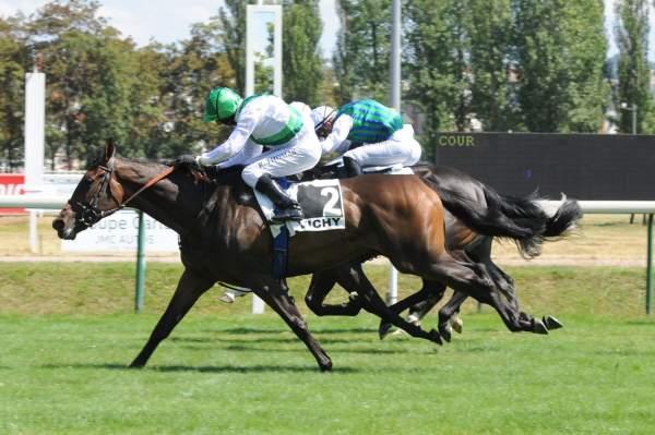 Photo de TICKLE ME GREEN cheval de PLAT