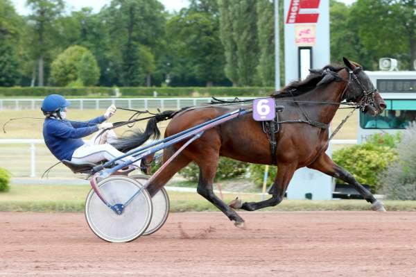 VINCENT FERM - La fiche CANALTURF du cheval, performances pmu, pédigré,  évolution de la cote en direct, résultats rapports, courses 2020
