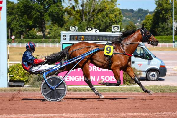 Photo de HOBBES cheval de TROT ATTELE