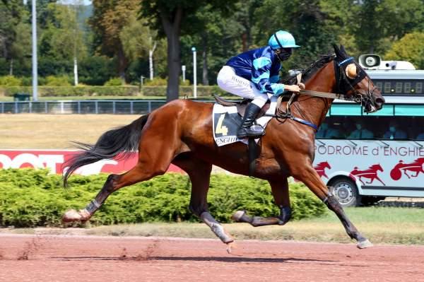 GRANDIOSO - La fiche CANALTURF du cheval, performances pmu, pédigré,  évolution de la cote en direct, résultats rapports, courses 2020