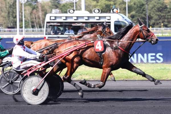 Photo de HARVEST DE BULIERE cheval de TROT ATTELE