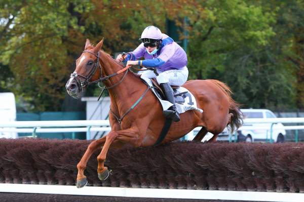 Photo de KING OF RUN  cheval de STEEPLE CHASE