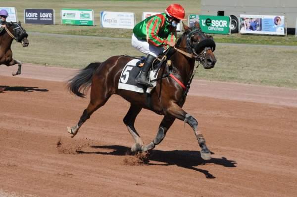 Photo de DONYX D'HAGUE cheval de TROT MONTE