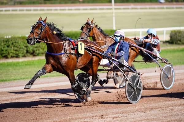 Photo de FRESNEAUX cheval de TROT ATTELE