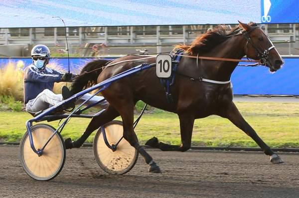 FREGATE MESLOISE - La fiche CANALTURF du cheval, performances pmu, pédigré,  évolution de la cote en direct, résultats rapports, courses 2020